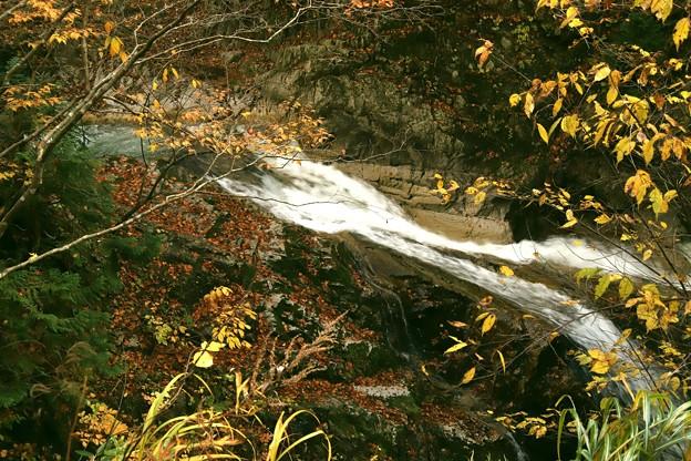 照葉峡の渓流の紅葉5