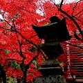大雄山の紅葉10