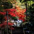 大雄山の紅葉13
