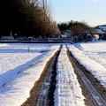 冬の田んぼの道