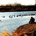 越辺川で撮影する人