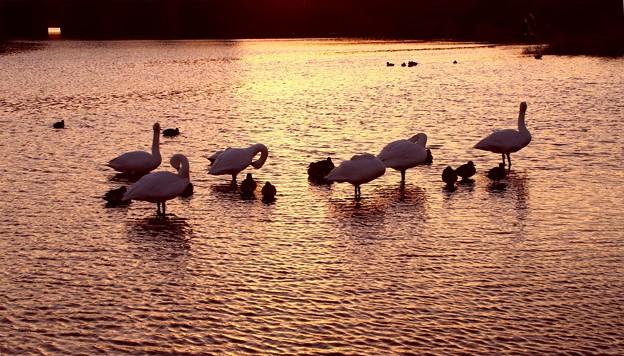 夕陽の越辺川
