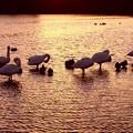 Photos: 夕陽の越辺川