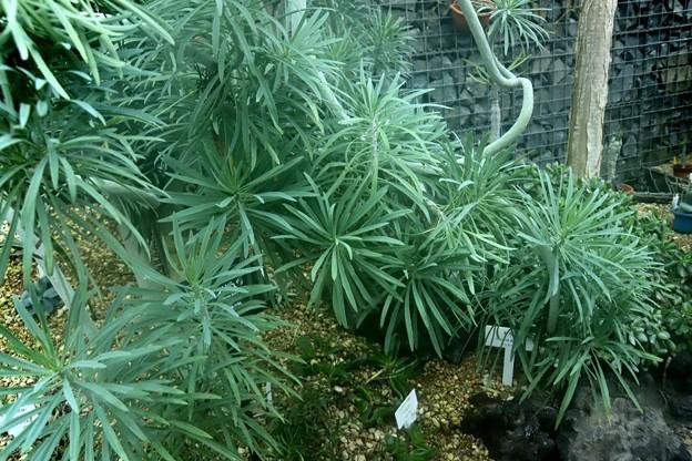 温室の中の植物2