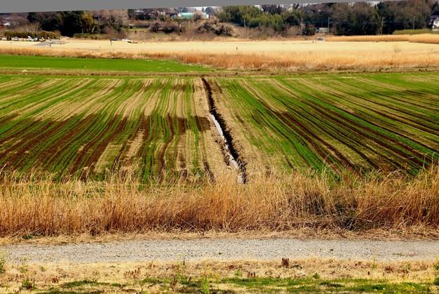 荒川河川敷の田園風景
