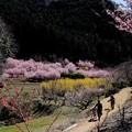 秘境の花園 古寺