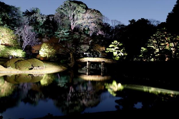 自然光のライトアップの六義園