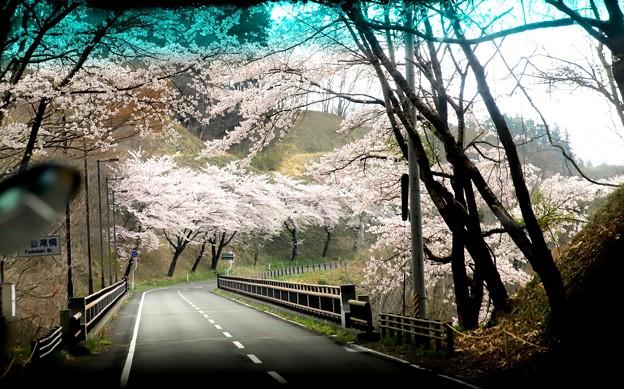 車中より三春滝桜への道