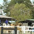 Photos: 乗馬練習風景