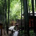 Photos: 報国寺竹庭園風景4