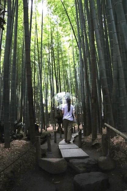 雨の報国寺竹林