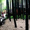 Photos: 報国寺竹庭園風景7
