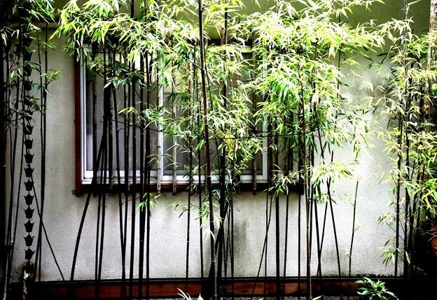 報国寺の小竹