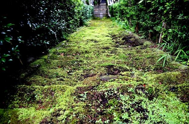 杉本寺苔の石段(上から風景)