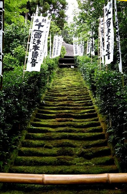 杉本寺の苔の石段