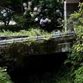 Photos: 三千院への道へ風景1