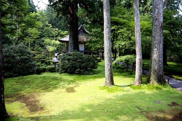三千院の苔の庭園1