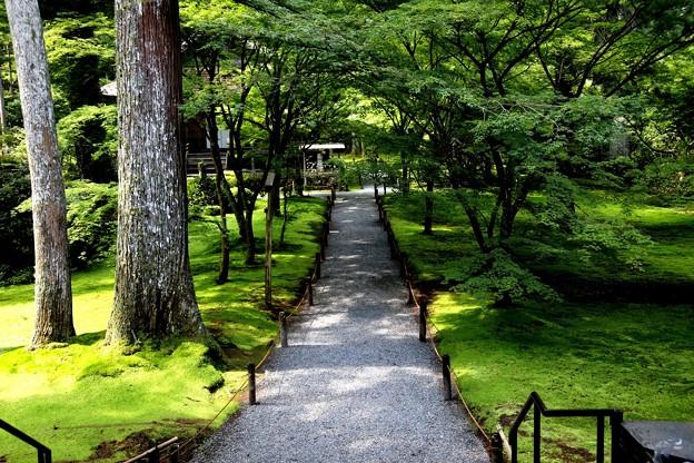三千院 苔の庭園2