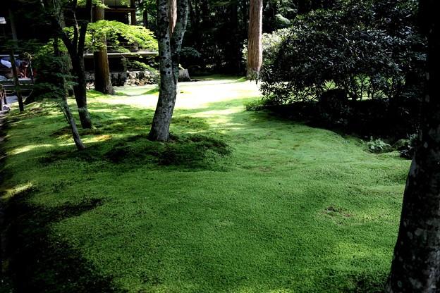 三千院 苔の庭園7
