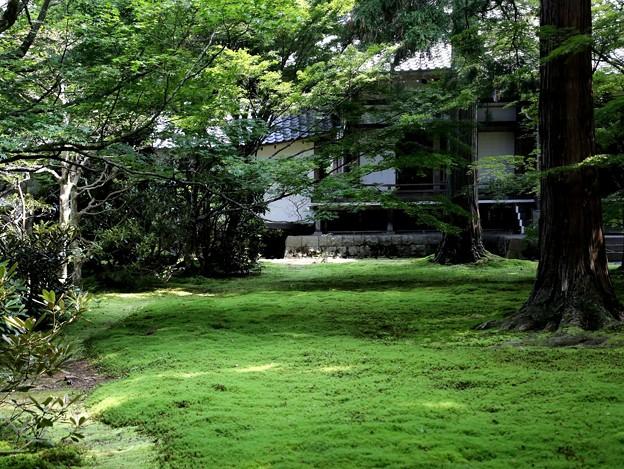 三千院 苔の庭園9