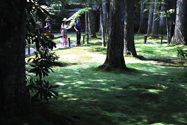 三千院 苔の庭園10