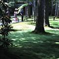 Photos: 三千院 苔の庭園10