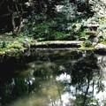 Photos: 三千院 池の庭園