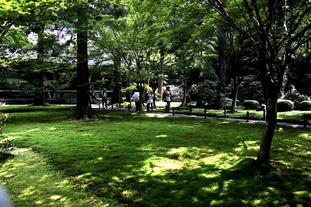 三千院 苔の庭園11
