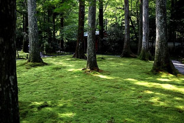 三千院 苔の庭園13