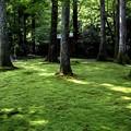 Photos: 三千院 苔の庭園13