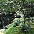 Photos: 三千院 池の庭園2