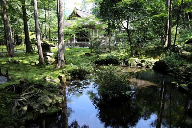 三千院 苔の庭園14