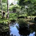 Photos: 三千院 苔の庭園14