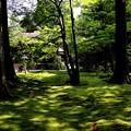 三千院 苔の庭園16