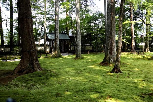 三千院 苔の庭園17