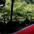 Photos: 実相院 部屋からの庭園風景