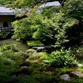 Photos: 実相院の池の庭園4