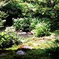実相院の池の庭園