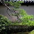 Photos: 松と塀