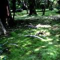 龍安寺の苔の庭園