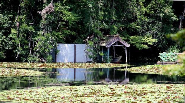 龍安寺 鏡容池4