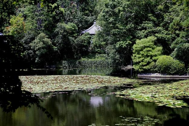 龍安寺 鏡容池5