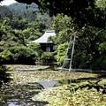 龍安寺 鏡容池7