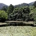 龍安寺 鏡容池8