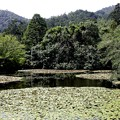 Photos: 龍安寺 鏡容池8