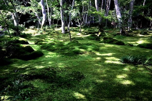 祇王寺苔の庭園1