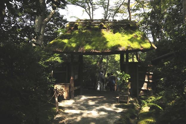 祇王寺苔の庭園3