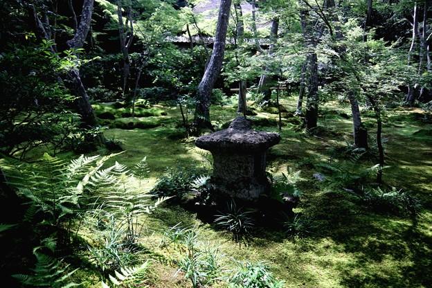 祇王寺苔の庭園4