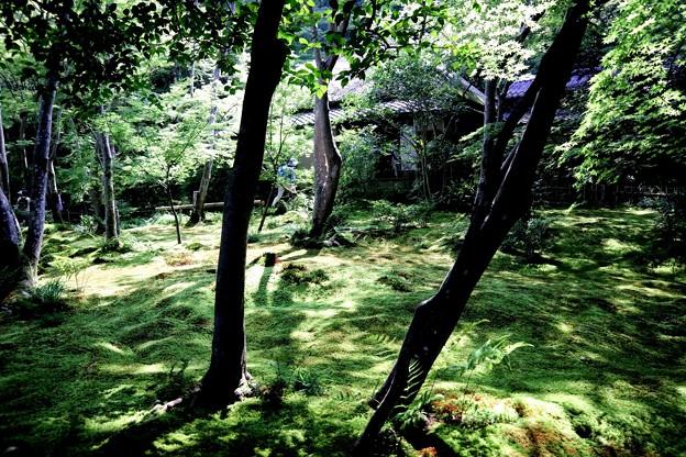 祇王寺苔の庭園7