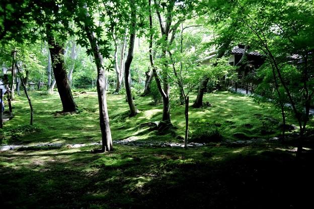 祇王寺苔の庭園9